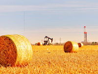 haybills in the foreground, pumpjack and rig in the background